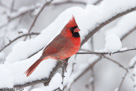 Winter Feeder Bird Photos